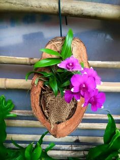 Orchids growing in a coconuthow to care for orchids after blooms fall off Orchid Arrangements, Beautiful Flower Arrangements, Beautiful Flowers, Orchid Planters, Orchids Garden, Hanging Orchid, Hanging Plants, Pruning Orchids, Comment Planter