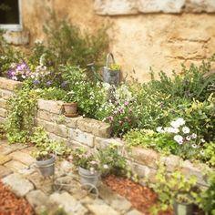 #ナチュラル#ナチュラルガーデン#ナチュラルガーデニング#naturalgarden #gardening…