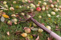 Streuobstwiese mit Äpfeln