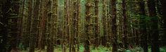http://www.fondosypantallas.com/wallpaper-bosque-de-pinos-7-142817/