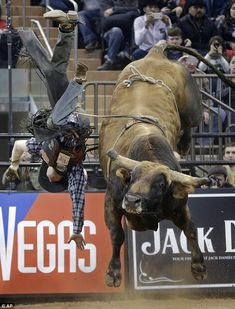 Madison Square Garden Rodeo | ... Invitational finals rodeo at Madison Square Garden in New York City