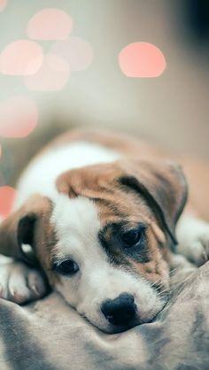 Sad Puppy Dog iPhone 5 Wallpaper