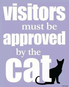 Visitors must be approved by the cat