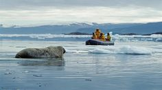 Walrus in the Canadian wilderness - Visit the arctic north of Canada Largest Countries, Countries Of The World, Ellesmere Island, National Geographic Expeditions, Big Country, Pacific Coast, Natural Wonders, Tour, Wilderness
