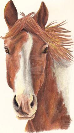Horse Drawing 1 by Lozi94.deviantart.com