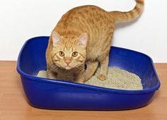 Seu gatinho não está utilizando a caixa de areia? Perceba porquê entrando no nosso artigo! #animais #gatos