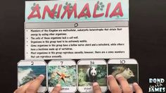 Is it a plant or a protist? Does it belong to eubacteria or archaebacteria? Use the Kingdoms of Life Card Sort Manipulative in your life science or biology classroom to engage and formatively assess your students over the 6 Kingdoms.  https://www.teacherspayteachers.com/Product/Kingdoms-of-Life-Card-Sort-Manipulative-439602