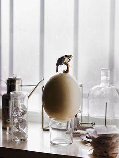 Huevo + avestruz, por Chema Madoz / Egg + ostrich, by Chema Madoz