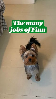 Funny Dogs, Cute Dogs, Apartment Dog, Yorkshire Terrier, Small Dogs, I Am Awesome, The Creator, Presentation, Anna