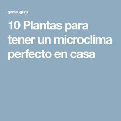 10Plantas para tener unmicroclima perfecto encasa