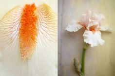 Flowers by dietlind wolf