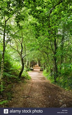 beautiful path through the forest | Forest path through the beautiful enchanted woods at ...