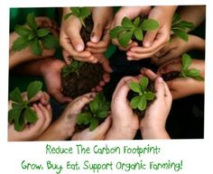 Plants for a Future - Database for edible and medicinal plants - Permaculture Legume Bio, Easy Vegetables To Grow, Planting Vegetables, World Environment Day, Edible Plants, Edible Flowers, Edible Garden, We Are The World, Parcs