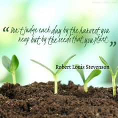 """""""Don't judge each day by the harvest you reap but by the seeds that you plant."""" -Robert Louis Stevenson"""