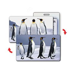 Cardinals Bird Baggage Tag For Travel Bag Suitcase Accessories 2 Pack Luggage Tags