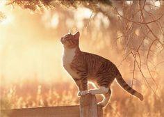 In memoriam Archieven - Blauwe Russen Cattery Het Woldlake Pretty Cats, Beautiful Cats, Pretty Kitty, Beautiful Things, Crazy Cat Lady, Crazy Cats, Cattery, Cat Boarding, Here Kitty Kitty
