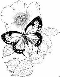 Baú da Web: Riscos de borboletas