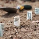 Money-Saving Tips for the Organic Gardener–Guest Post