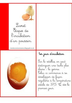 Montessori pour les 6 - 12 ans Reggio, Montessori Elementary, Science, Fruit, Food, College, Cards, Preschool Math, Baby Chicks