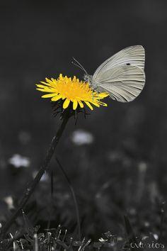 Gray and Yellow by Eva Rios Ortega