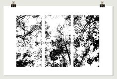 Black & White Trees Modern Pop Photography by SmokestackPhotomat, $25.00