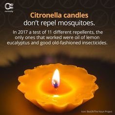 No wonder we're covered in bites. Check out the full article on Curiosity.com and in the Curiosity app! #citronella #candles #mosquitos #mosquito #curiosity Lemon Eucalyptus Oil, Citronella Candles, One Light, Curiosity, Birthday Candles, Eat, Check, Instagram