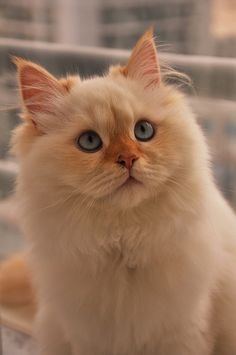 """Cat ❁❁❁Thanks, Pinterest Pinners, for stopping by, viewing, pinning, & following my boards. Have a beautiful day! And""""Feel free to share on Pinterest""""✮✮"""" #homes #fashion #goodfood www.organicgardenandhomes.com"""