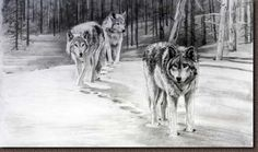 black and white wolf drawing. From pixgood.com