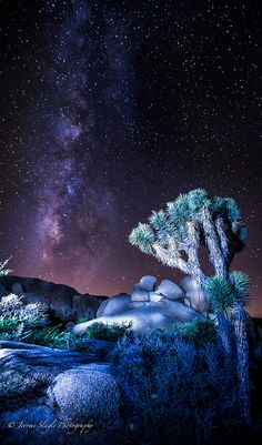 Joshua Tree National Park at night, California by Jerome Slagle