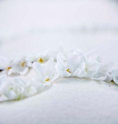 White flowers - photographed by Iris Steevens - Flowers by Moods by Sarah - undertaker Strikt Persoonlijk Uitvaart