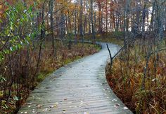 The nature trail at Kensington Metro Park taken by Richard Cook.