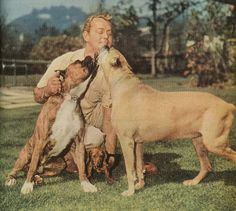 1952 - Alan Ladd and his Boxer dogs