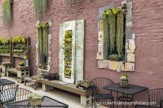 Wall+of+succulent+arrangements+at+the+Succulent+Cafe+in+Oceanside+-+www.succulentsandsunshine.com