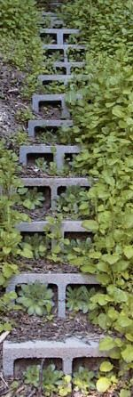 Retaining wall idea: simple, inexpensive, durable, non-toxic, and easy to assemble retaining wall constructed using hollow concrete blocks. Because the blocks have been laid on their side, sloped backwards toward the hillside, you can plant vegetation in the their hollows exposed to the front. As vegetation is established, this will become a living wall. Similar technique to fashion steps as well.