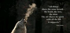 ~Wolf Quotes~ All things share the same breath, the beast, the tree, the man. The air shares its spirit with all the life it supports Totems, Lone Wolf Quotes, Wolf Qoutes, Chief Seattle, Animal Reiki, Spirit Quotes, Heart Quotes, Wolf Spirit Animal, Wolf Wallpaper