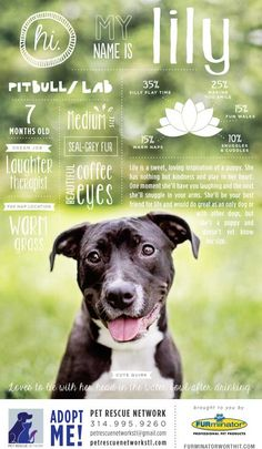 This is a really cute idea for pet adoption posters! Could post them around town and things.