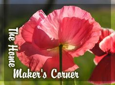 Discover the Wisdom to Recover: The Passover – What Is The Biblical  Correct Day?