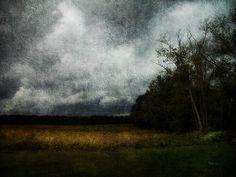 Field of Gold. cynthia-lassiter.artistwebsites.com