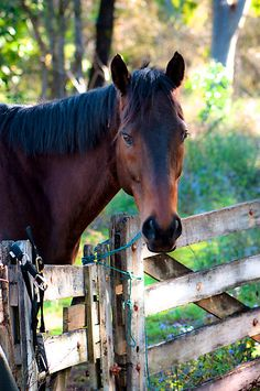 Waiting at the gate by Renee Hubbard Fine Art Photography - what a beautiful horse