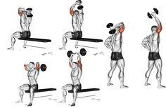 O tríceps francês é uma variação muito interessante para o trabalho muscular da região alvo. Alguns detalhes, fazem com que ele seja ainda mais efetivo. Uma das formas mais efetivas de trabalhar qualquer músculo, é oferecer a ele, sobrecargas tensionais, com variações de movimento. Por isso, independentemente de qual seja o objetivo, o treino de …