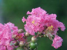 1000 id es sur le th me fleurs tropicales sur pinterest ikebana arrangements de fleurs. Black Bedroom Furniture Sets. Home Design Ideas