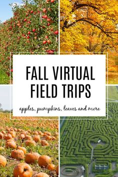 Apple Activities, Fall Preschool Activities, Educational Activities, Learning Activities, Minecraft Activities, Therapy Activities, Virtual Field Trips, Home Learning, Tours