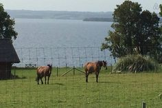 """Check out this awesome listing on Airbnb: """" Puerto Varas, Patagonia, Chile"""" - Apartments for Rent in Puerto Varas Patagonia, Apartments, Chile, Entrance, Horses, Awesome, Nature, Lakes, Cozy"""