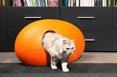 litiere pour chat