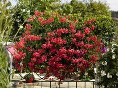 fleurir son balcon avec beaucoup de fleurs, idee deco terrasse pour avoir un balcon fleuri