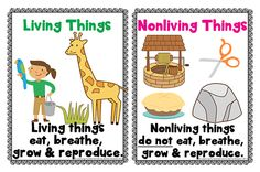 Looking for resources for living and nonliving things? This blog post gives you some ideas and has FREE posters, mini-reader, and sorting activity for your preschool/KG class- you could even use if for first grade! #livingnonlivingunit #elementaryscience