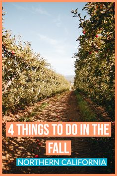 Things to do in the Fall in the Bay Area \ apple picking in Watsonville \ Fall Activities Bay Area California Travel, Northern California, Cool Places To Visit, Places To Travel, Travel Destinations, Dublin Things To Do, Road Trip Usa, Usa Trip, Autumn Activities