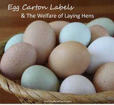 Egg Carton Labels And Animal Welfare