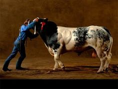 Bison, Beefalo, or Belgian Blue Angus - Cattle Genetics Industry Evolves Farm Animals, Animals And Pets, Giant Animals, Strange Animals, Belgian Blue Cattle, Super Cow, Arthus Bertrand, Bull Cow, Beef Cattle
