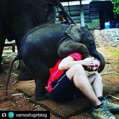 Quem topa essa brincadeira?  #Repost @vamosfugirblog with @repostapp  Nada como brincar com um bebê de 3 meses com 85 kg!  #elephant #chiangmai #Tailândia #luademel #mochilão #mochilaosudesteasiaco #mochilaodemel #elefante #loveanimals #braroundtheworld #viajantesdubbi #vamosfugir #trippics #mochileiros #historiaspracontar #aventura #adventure #desviantes #turistando #turismodeaventura - http://ift.tt/1HQJd81